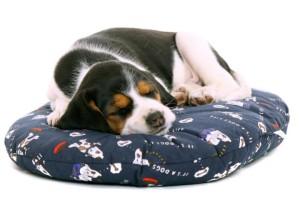 Hund liegend auf Hundekissen als Hundebett