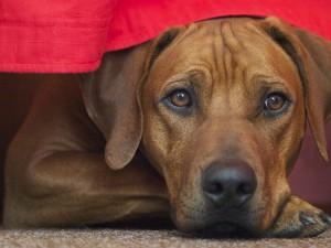 Hundekissen oder Hundecouch als Hundeschlafplatz